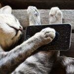 cat with iphone